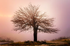 Abandoned and lonely tree in mountains shrouded in mist Stock Image