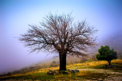 Abandoned and lonely tree in mountains shrouded in mist Royalty Free Stock Image