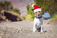 Abandoned and lost dog at christmas Royalty Free Stock Image