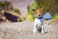 Abandoned and lost dog stock image