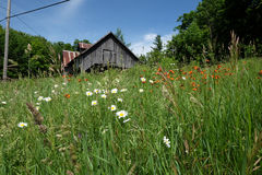 Abandoned maple sugar shack in Quebec. Abandoned maple sugar shack in a meadow in Quebec with flowers in foreground Royalty Free Stock Images