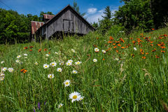 Abandoned maple sugar shack in Quebec. Abandoned maple sugar shack in a meadow in Quebec with flowers in foreground Stock Images