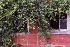 Abandoned Milk Barn. An old abandoned milk barn on an old farm royalty free stock photos