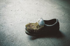 Abandoned moss-grown shoe Stock Image