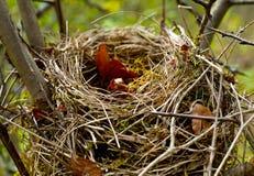 Abandoned nest Royalty Free Stock Image