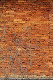Abandoned Old Brick Wall Stock Images