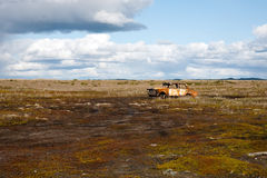 Abandoned old car. Old rusty car abandoned in the middle of a big marsh Royalty Free Stock Photography