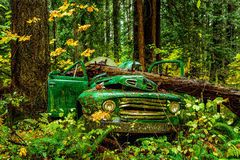 Abandoned old Ford truck in Rainforest, British Columbia, BC, Ca Stock Image