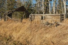 Abandoned old log barn in fall Royalty Free Stock Image