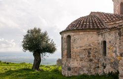 Abandoned old orthodox Christian church and olive tree Stock Image