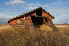 Abandoned Old Shed In Grassy Field In Fall Stock Photo