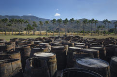 Abandoned old wooden rum barrels at a sugarcane plantation. Royalty Free Stock Images