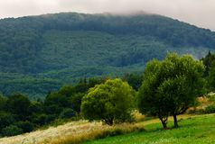 Abandoned orchard in mountains. Summer countryside on a cloudy day Stock Images