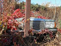 Abandoned overgrown car royalty free stock photos