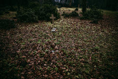Abandoned overgrown grave in the woods Royalty Free Stock Photo