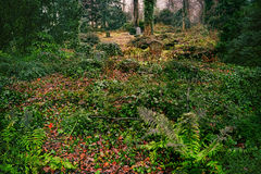 Abandoned overgrown grave in the woods Stock Images