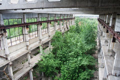 Abandoned overgrown ruins of industrial building, green post-apocalypse concept Stock Photography