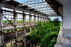 Abandoned overgrown ruins of industrial building, green post-apocalypse concept Royalty Free Stock Photography