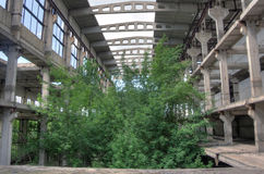 Abandoned overgrown ruins of industrial building, green post-apocalypse concept Stock Photo