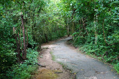 Abandoned path to the jungle Royalty Free Stock Photos