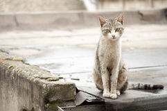 Abandoned pet Royalty Free Stock Images