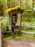 Abandoned Phone booth into the Hoh Rain Forest Stock Photos