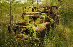 Abandoned Pick up in the Everglades Royalty Free Stock Photography