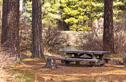 Abandoned Picnic Table In Forest. A lone abandoned picnic table sits chained to the ground in the forest royalty free stock photos