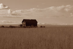 Abandoned Prairie Homestead. A very old homestead out in the middle of a wheat field stock photography