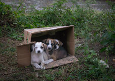 Abandoned puppies in a cardboard box Stock Photography