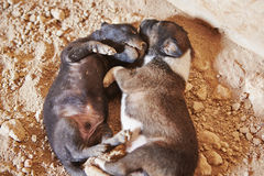 Abandoned puppies Stock Image