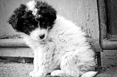 Abandoned puppy Stock Images