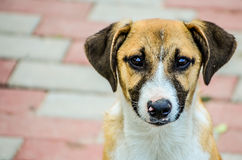 Abandoned puppy stray dog Royalty Free Stock Image