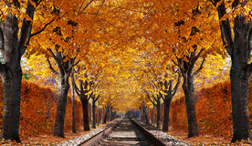 Abandoned railroad. In autumn forest stock photos