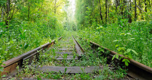 Abandoned railroad in the woods Stock Photos