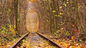 Abandoned Railway under Autumn Colored Trees. Tunnel of Love stock video