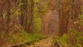 Abandoned Railway under Autumn Colored Trees. Man Walking on Abandoned Railway under Autumn Colored Trees of Love Tunnel stock video footage