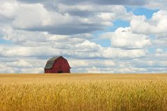 Abandoned rd barn in wheat field Royalty Free Stock Photography