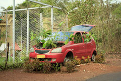 An abandoned red car with germinate Royalty Free Stock Photos