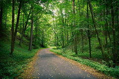Abandoned Road In A Deep Green Forest Stock Photography