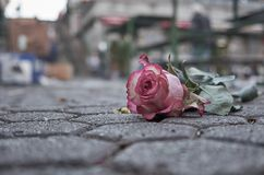 Abandoned rose on pavement royalty free stock photography