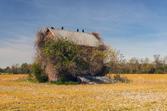 Abandoned and Ruined. Creepy, abandoned house overgrown with vegetation and vultures perched on roofline stock photo