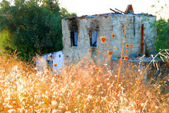Abandoned And Ruined House. With Yellow Brushes Royalty Free Stock Images