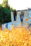 Abandoned And Ruined House. With Yellow Brushes Royalty Free Stock Image