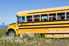 Abandoned school-bus. Old abandoned school bus in a meadow with white flowers at the ocean side Royalty Free Stock Photography
