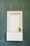 Abandoned School Water Fountain with Green Tiles Stock Photo