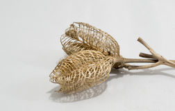 Abandoned Seed Pods Intertwined On White Form A Delicate Weave. Finished seed pods intertwined at there branches forming a delicate weave on a white background Royalty Free Stock Image