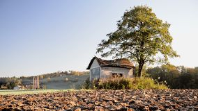 Abandoned shack, barn in the field at sunrise with tree next to it. Roof already collapsing, windoes are broken stock footage