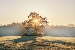 Abandoned shack, barn in the field at sunrise with tree next to it. Roof already collapsing, windoes are broken royalty free stock photography