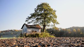 Abandoned shack, barn in the field at sunrise with tree next to it. Roof already collapsing, windoes are broken stock video footage